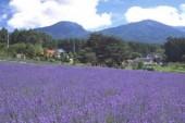 lavendergarden 3