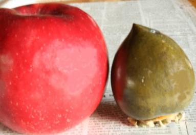 黒実柿とりんご