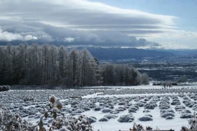 2014冬のラベンダー園