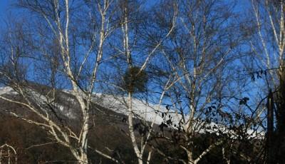 今日は浅間山がきれいでした